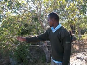"""Comércio de carbono e REDD+ em Moçambique: camponeses """"cultivam"""" carbono ao serviço de poluidores"""