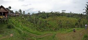 Tutela per le religioni indigene dell'Indonesia