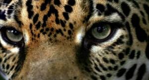 Un ejemplo: Costa Rica prohíbe la caza