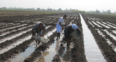 "Cooperatives: Egypt's Farmers Sow the Seeds of an ""Agricultural Revolution"""