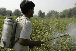I pesticidi altamente tossici dovrebbero essere ritirati dai paesi in via di sviluppo