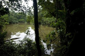 Civil Society Calls for Vote on Drilling in Ecuador's Yasuní Park