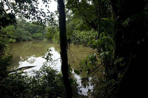 Civil Society Calls for Vote on Drilling in Ecuador's Yasuní Park