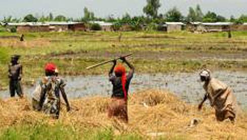 Burundi : 92% des agriculteurs sans appuis financiers