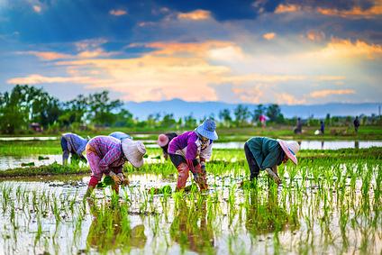 Agriculture et alimentation, des noms au féminin