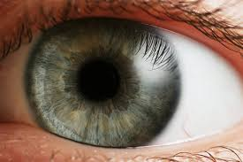 3-D Tissue Printing: Cells from the Eye Inkjet-Printed for the First Time