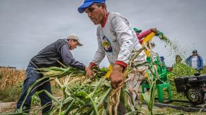 Visita a los proyectos de desarrollo alternativo en las comunidades del Morro y Engunga