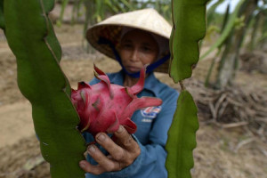 Family Farming, Vital in a World Where 800 Million People Lack Access to Healthy Food