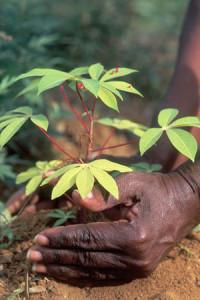 Consultation pour la biodiversité agricole