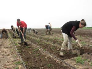 Un oasis coopératif dans un monde néolibéral : le village utopique de Marinaleda en Espagne