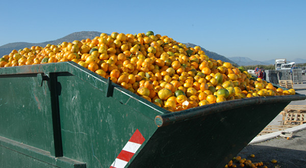 If we had to pay the bill to nature, what would food waste cost us?
