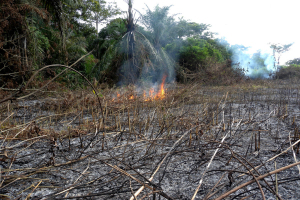 On International Day, UN Urges Protection of Environment from 'Ravages of War'