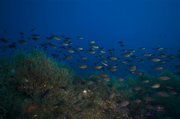 Greenpeace: primo via libera alle trivelle nel Canale di Sicilia, continueremo ad opporci