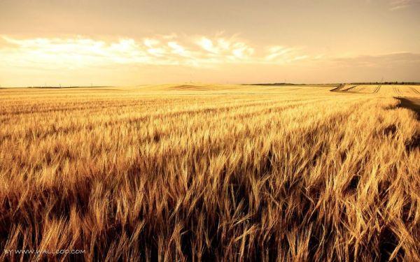 Zimbawe: colpita da sanzioni, Mosca compra il grano di Harare