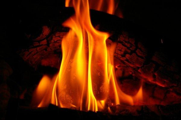 El pino negro y otros fuegos