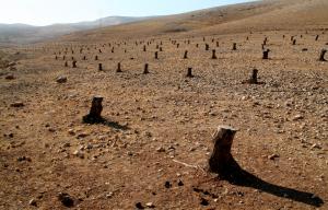 Organizzazioni ambientaliste italiane confermano: Nessuna collaborazione con Beautiful Israel