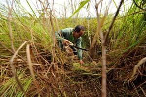 Otto paesi coinvolti nei progetti FAO per il cambiamento climatico