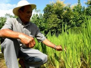 Nuevo abordaje latinoamericano de agricultura y combate al hambre