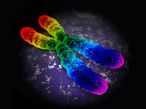 'Gay gene' debunked? Environment influences sexuality