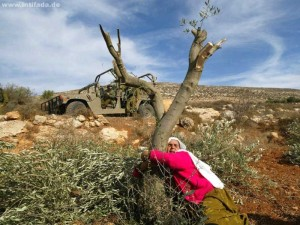 Destruction of Palestinian olive trees is a monstrous crime – The Economist