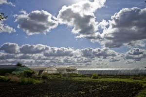 Agriculture écologique : prenez-en de la graine !