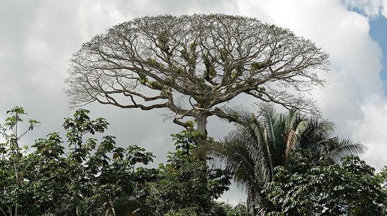 Stop oil drilling in Ecuador's Yasuní National Park