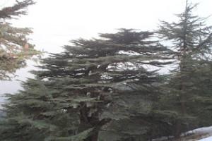 Lebanon:  fertile ground for innovation