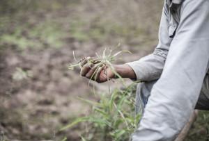 El INTA muy duro con el agronegocio