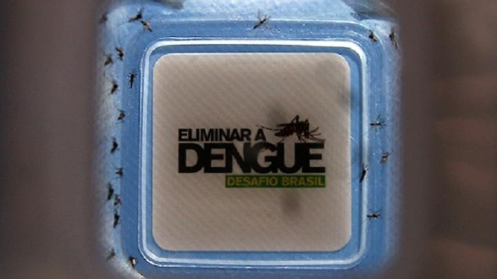 Mosquitos genéticamente alterados contra el dengue