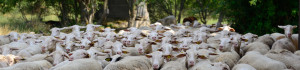 Sin ovejas no hay pastores