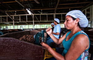 Peruvian trade unions  challenge  union busting law