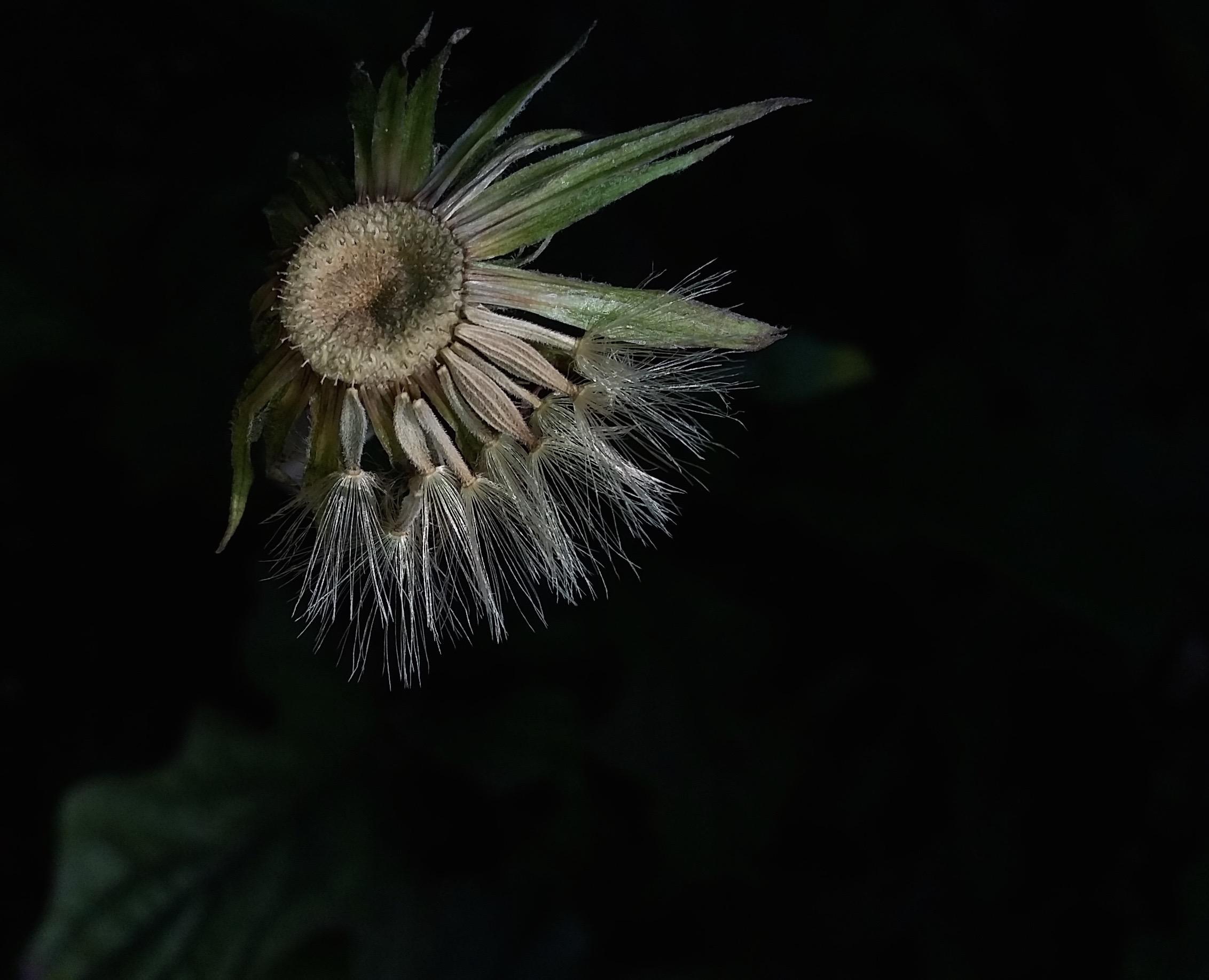 flor una foto hecha por Camila Cienfuegos