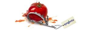 Rekord: Masseneinspruch gegen Patent auf Tomate
