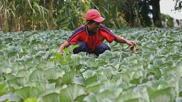 Asia – Climate Change Taking Toll on Food Security