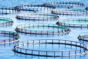 Tierzucht in Aquakultur – eine neue Form der Massentierhaltung