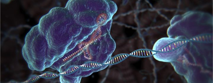 CRISPR: The Editing of Human Genes