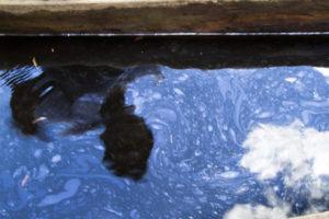 La serpiente de metal que envenena la Amazonía Peruana