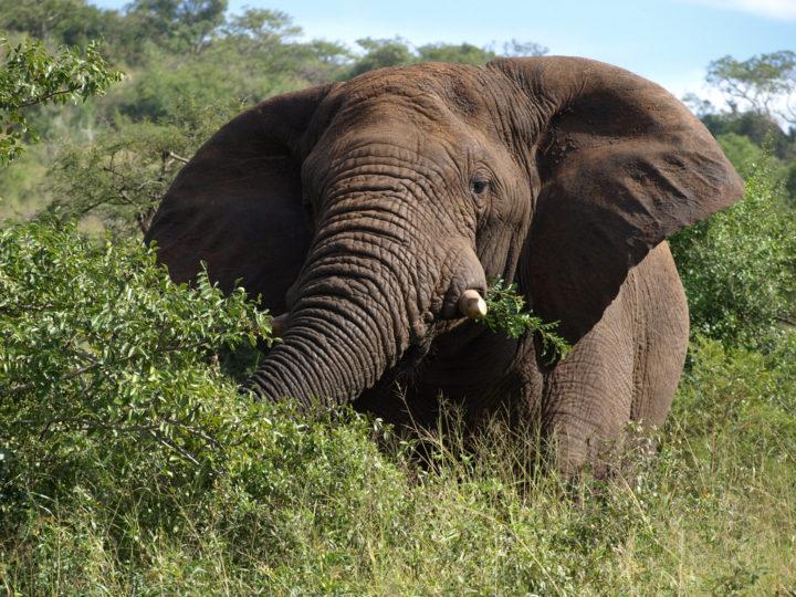 Spesa militare USA: l'elefante nella stanza