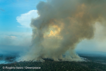 5 Alarming Facts about Amazon Forest Fires
