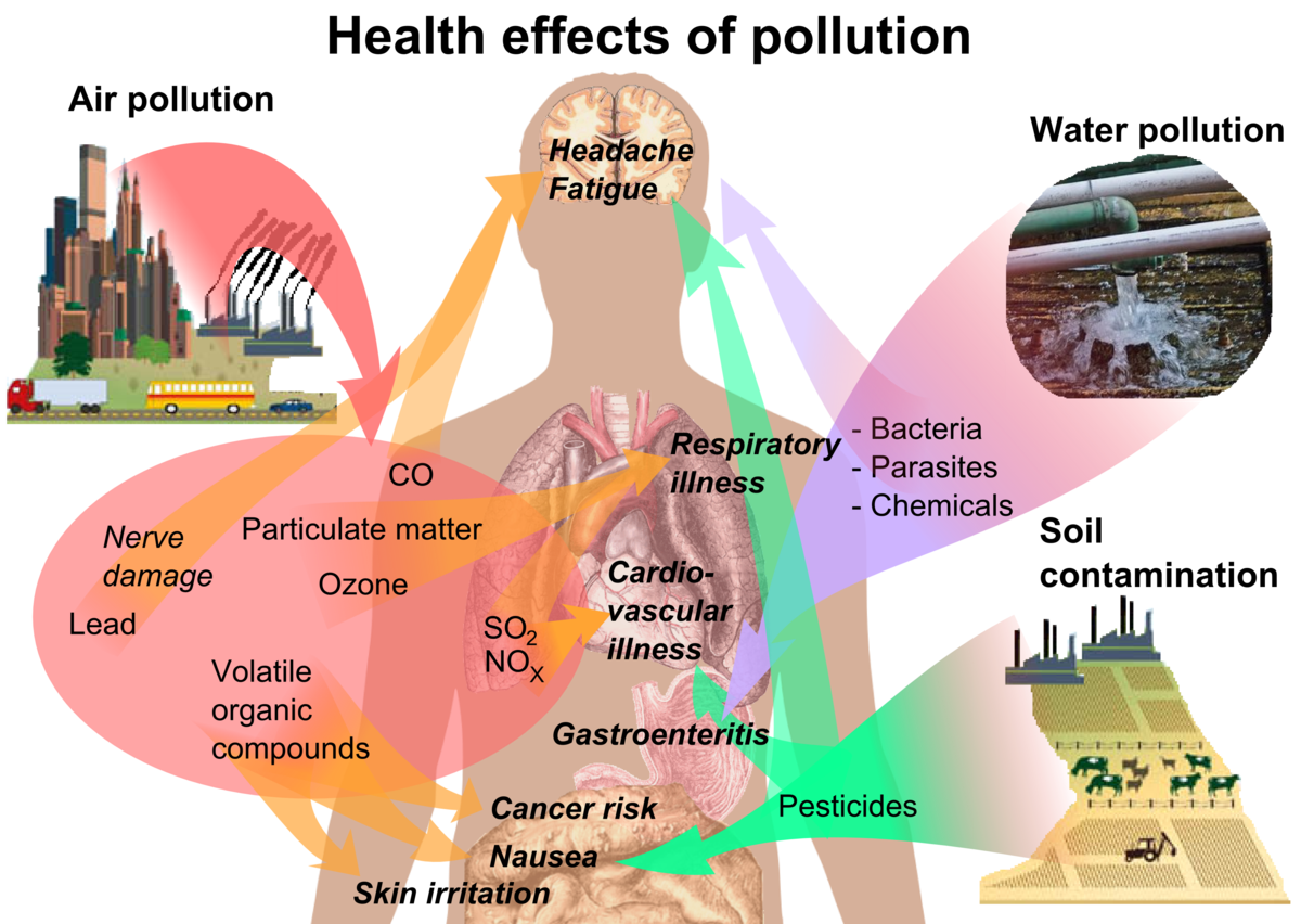 plastics have hazardous influence on human health This article evaluates incineration on the basis of three parameters - environmental, human health and economic impact - and proposes an integrated mechanism to maintain a fine balance between energy recovery and environmental concerns.