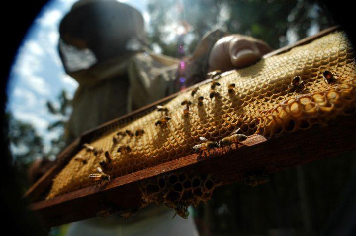 Los desafíos de la apicultura y el comercio justo en América Latina