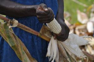 Kenya, dove i contadini assicurano i raccolti via SMS