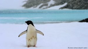 Ross Sea in Antarctica to become world's largest marine sanctuary