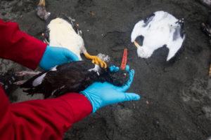 Catastrophe environnementale au Chili : le gouvernement a sacrifié Chiloé