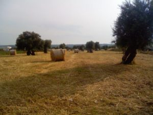 Roma capitale del consumo di suolo