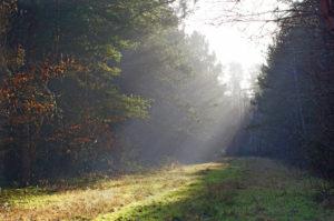 Un Libro Bianco sul futuro delle foreste italiane
