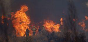 Organizaciones sostienen que es urgente poner fin al modelo forestal