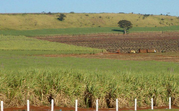 Área ocupada por latifúndio cresceu 372% no Brasil nos últimos 30 anos