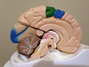 Terapias Neurocientíficas: nuevas investigaciones para abordar conflictos