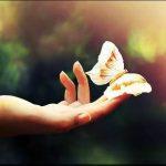 Brunella Giovannini – intervista su Un volo di Farfalle